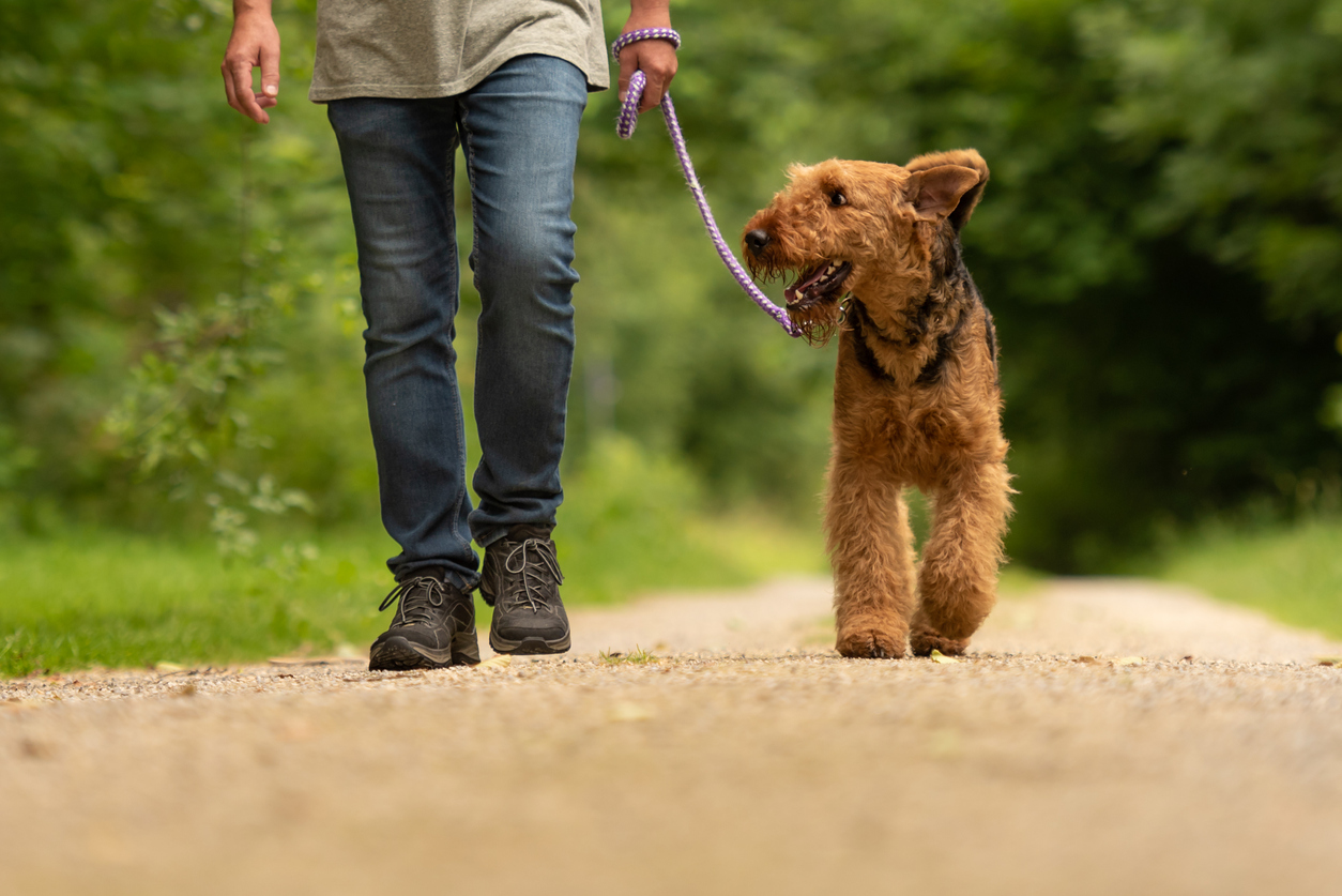 A dog and its owner walking on a countryside footpath