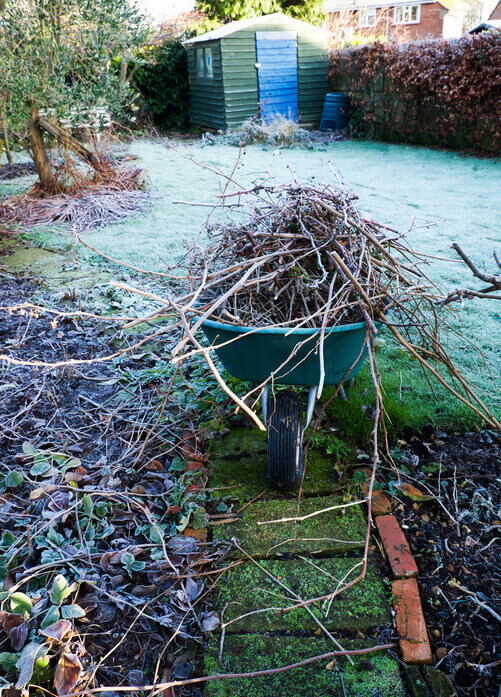 Frosty garden with wheelbarrow and shed