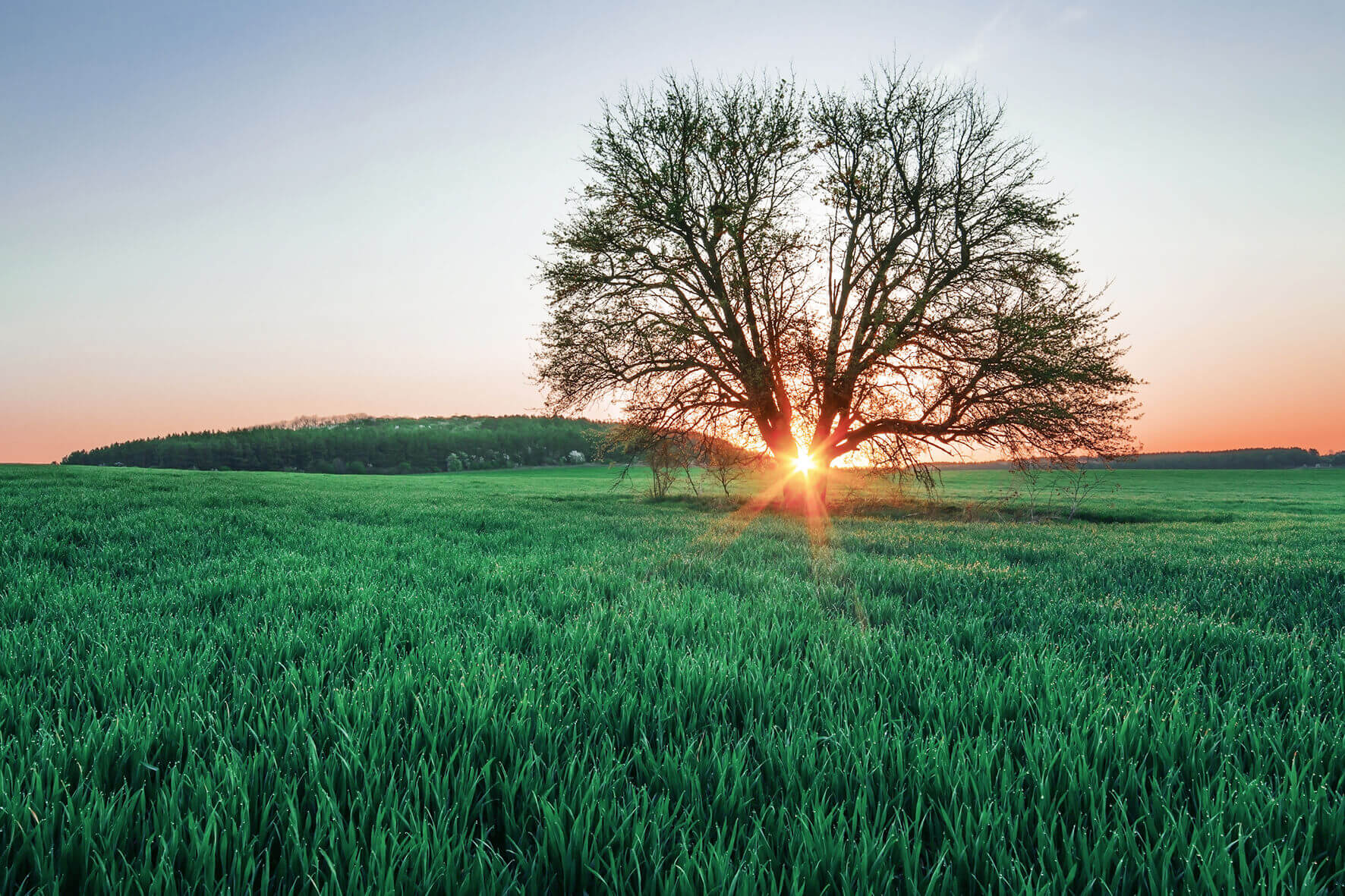 Rural landscape with a large tree and the sun setting in the background