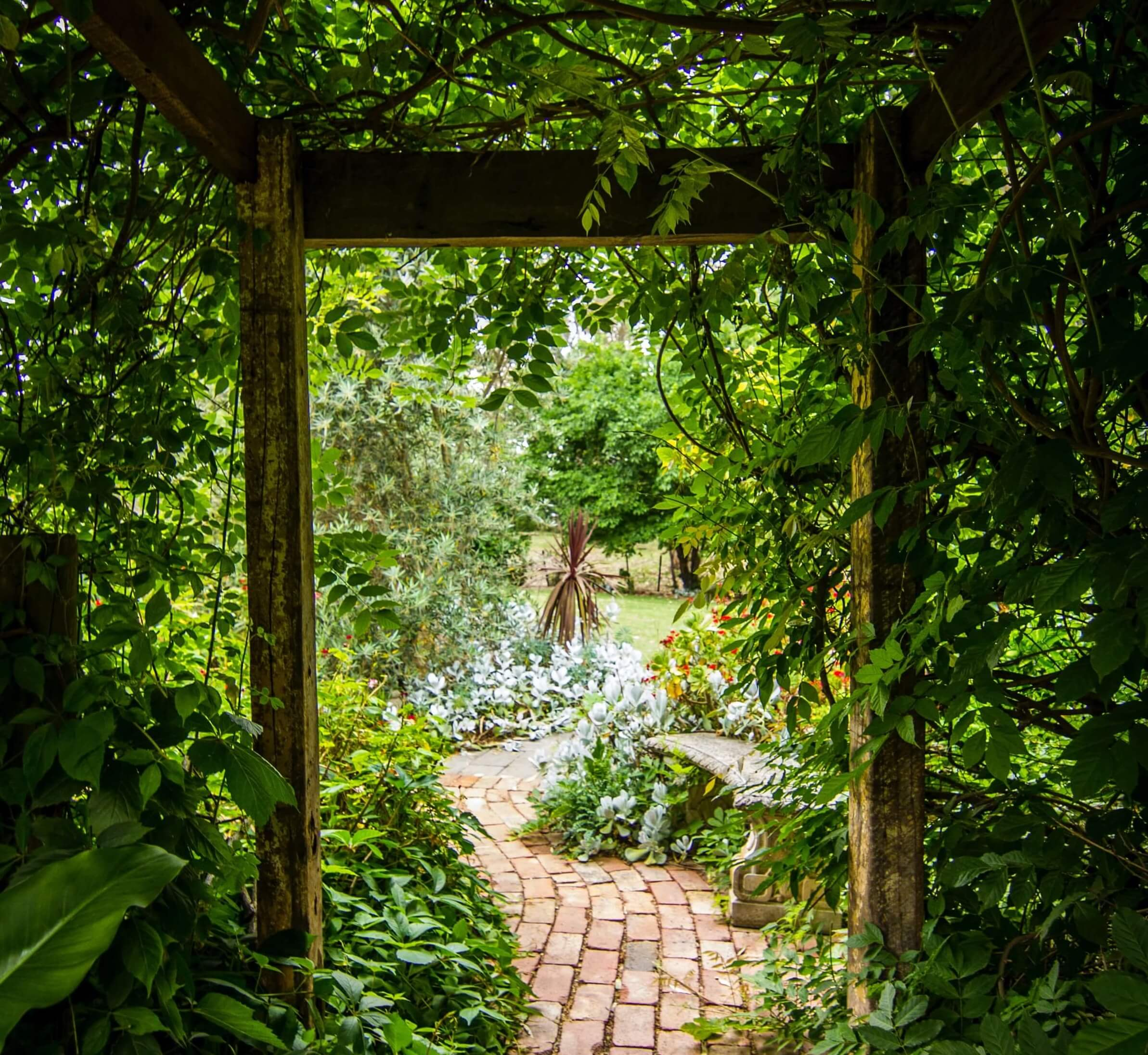 A secret opening to a renovated garden