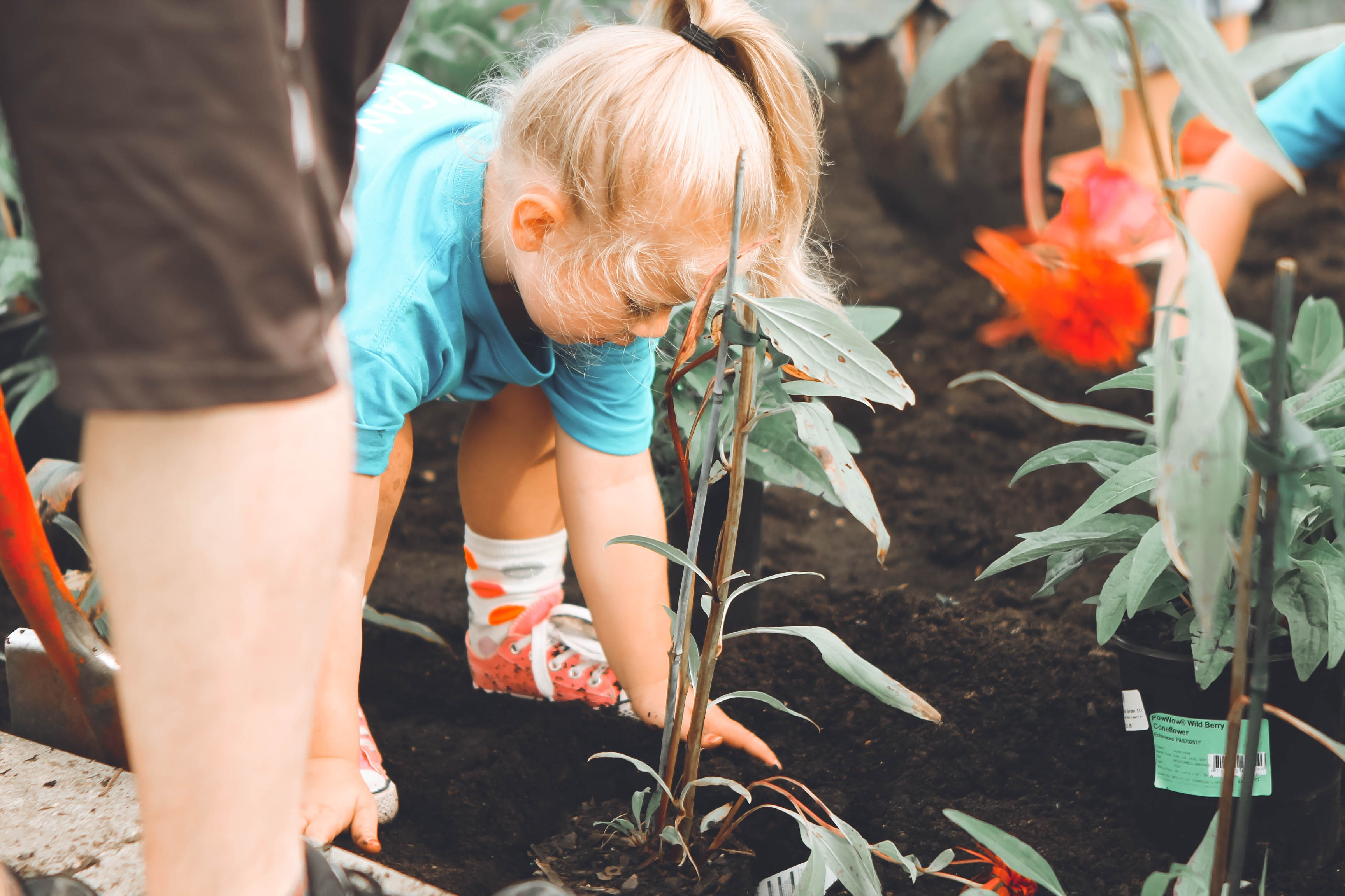 A young girl planting flowers in her garden