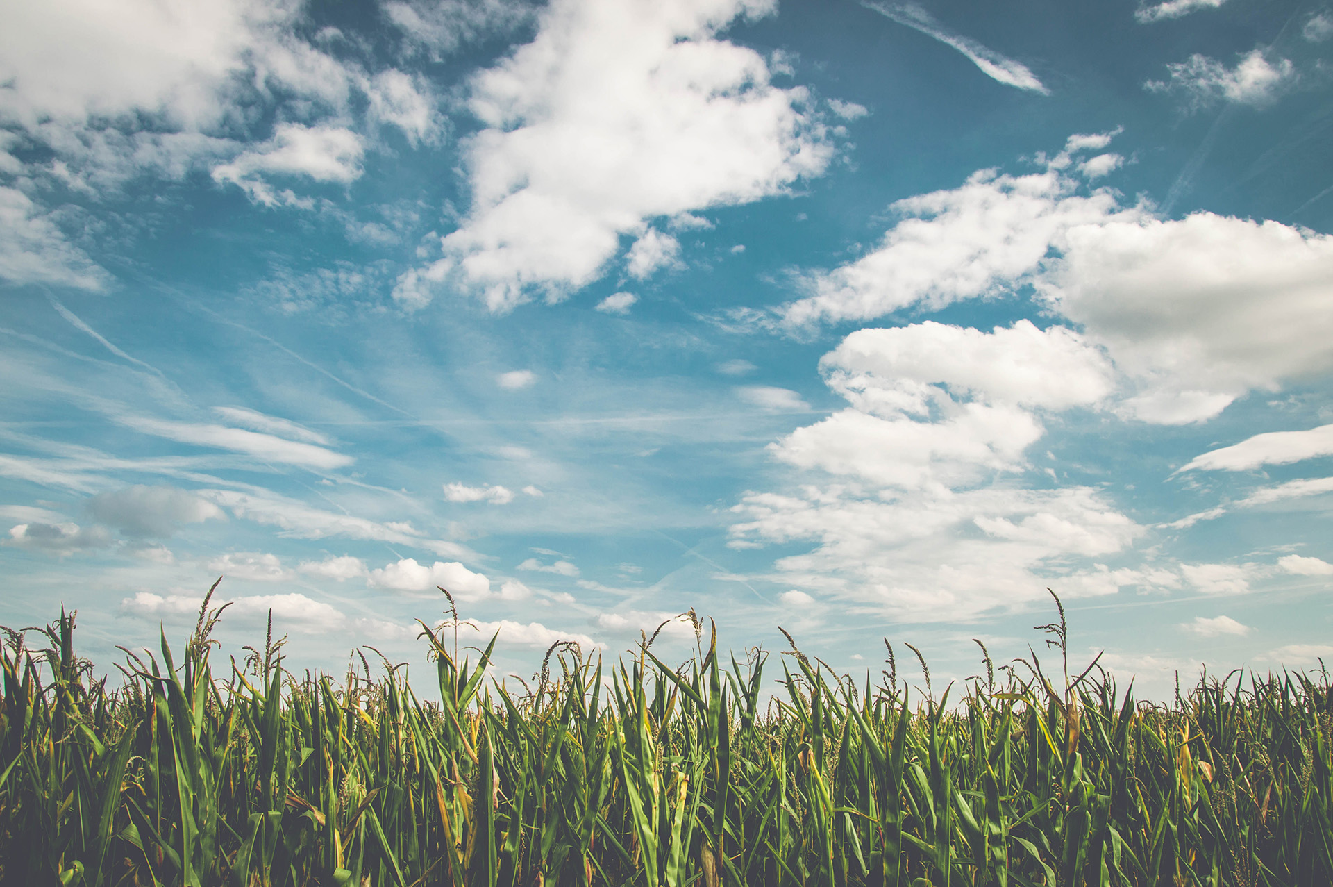 Grass sprouting beneath a bright blue sky with clear clouds