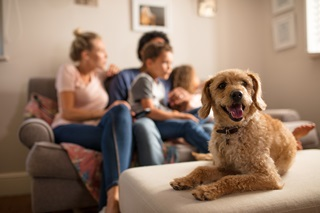 An open-mouthed dog on a footstool with a family sitting on a sofa in the background
