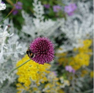 Image of flower and bee
