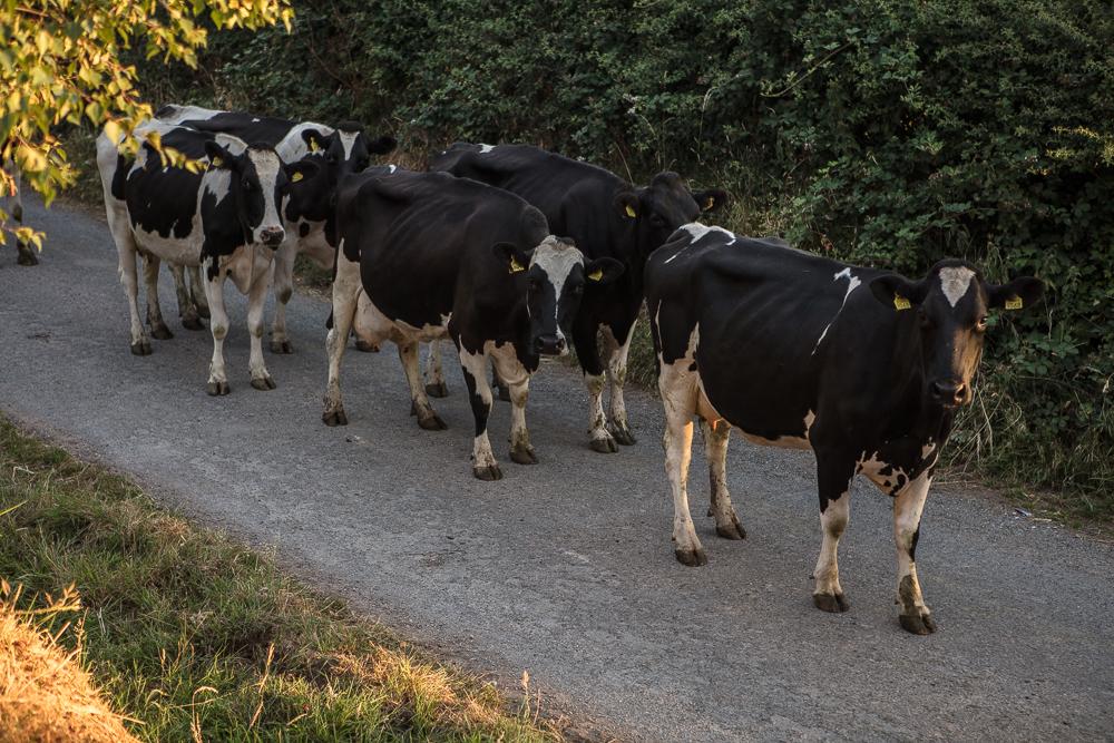 dairy lpg farming